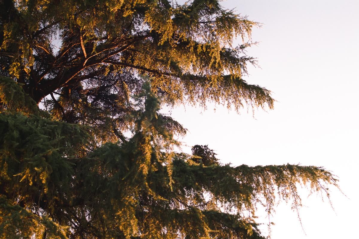 el retiro park golden hour